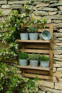 plantes aromatiques en seaux métalliques sur une étagère murale