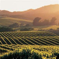 Napa Valley. I visited Napa and Sonoma a few years ago in the fall. It was one of the most beautiful places I've been!