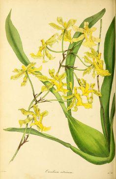 v.4 (1838) - Paxton's magazine of botany, - Biodiversity Heritage Library