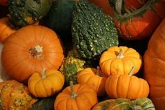 10 Fabulous Fall Foods and Recipes