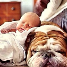 Baby and Bulldog