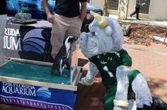 Rocky and his penguin friend. #USF