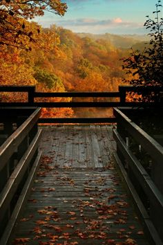 I just love the time when is fall because leaves fall and cosy drinks smell everywhere and who wouldn't love a long walk in a autumn woods just love it my favourite season ever.