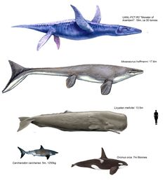 Modern day fish and mammals compared to prehistoric marine mammals and reptiles
