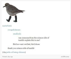 Bird's shoe preferences. | Community Post: 12 Times The Science Side Of Tumblr Explained It Better