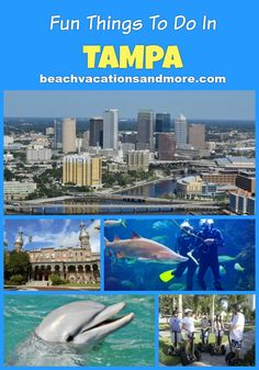 Top fun things to do in Tampa, Florida on vacation - Dolphin Cruise, Florida Aquarium, Clearwater Marine Aquarium, Busch Gardens, Scuba Diving, Clearwater Dolphin Watching and more activities and points of interest