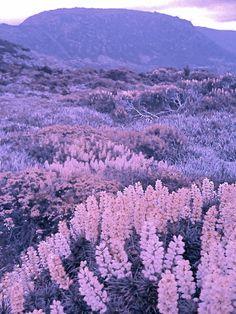 pink and purple landscape