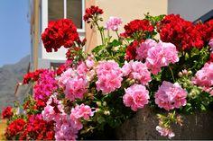 rot und rosa kombinieren