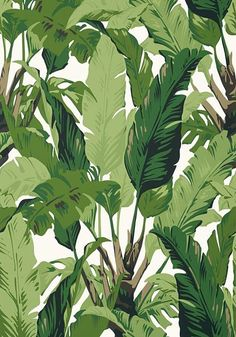 Thibaut Palm Print Wallpaper Home Deco bold print wallpaper bedroom palm Print T. - Thibaut Palm Print Wallpaper Home Deco bold print wallpaper bedroom palm Print Thibaut wallpaper - Palm Wallpaper, Tropical Wallpaper, Print Wallpaper, Tree Wallpaper Bedroom, Kawaii Wallpaper, Travellers Palm, Tropical Design, Tropical Prints, Palm Print