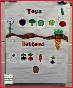 More Plants Tops And Bottoms! Read the book and sort plants that grow above and below the soil!Tops And Bottoms! Read the book and sort plants that grow above and below the soil! Kindergarten Smorgasboard, Kindergarten Classroom, Kindergarten Activities, Classroom Activities, Science Activities, Science Lessons, Kindergarten Pictures, Preschool Garden, Spring School