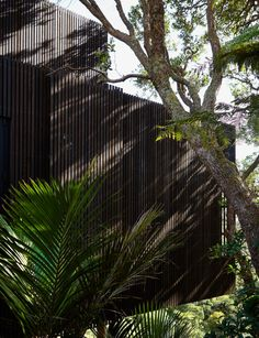 This award-winning home on Waiheke Island is a house of high drama Timber Ceiling, Waiheke Island, Inside Home, Black Floor, Plant Leaves, Awards, Drama, The Incredibles, Architecture