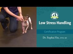 Dr. Yin's Animal Behavior and Training Videos | Dr. Sophia Yin, DVM, MS