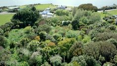 Exploring a beautiful, 23-year-old food forest in New Zealand (Video)