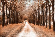 'Frostiger Feldweg' von Dirk h. Wendt bei artflakes.com als Poster oder Kunstdruck $23.37