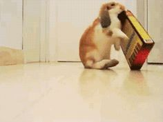 This bunny who just desperately wants some of cat treats. | The 33 Most Important Bunny GIFs On The Internet
