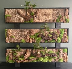 Wall Art, Bonsai Wall Art, Bonsai Wall Art, Today vertical gardening is very popular. Who said that you need big yard or gardens to fulfill your desire of having lovely flowers and plants? Moss Wall Art, Moss Art, Bonsai Art, Bonsai Garden, Garden Art, Garden Design, Succulent Wall Art, Mini Bonsai, Deco Nature