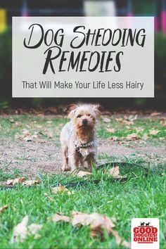Best 25 Dog Shedding Ideas On Pinterest Dog Itchy Skin
