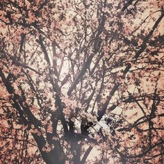 #spring #tree #cherryblossom #photo Spring Tree, Cherry Blossom, My Arts, Drawing, Instagram Posts, Drawings, Cherry Blossoms, Paint, Draw