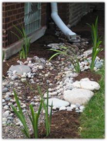 Rain garden just planted wwwnwbloomcom Rain Wise gardens