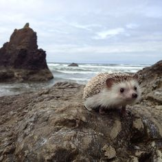The fantastic advantures of Biddy the hedgehog