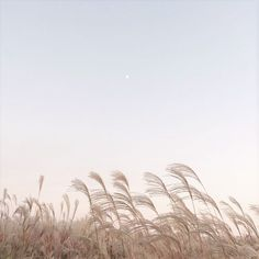 Pin by 𝓀𝒾𝓁𝑒𝓎 on ‧͙⁺˚*・゚sky Landscape pictures Beige