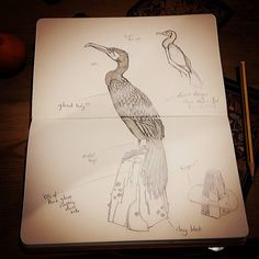 This week I rediscovered the art of drawing and it is so exciting! It's been a looong time since I sketched and I don't know why. It really helped inspire clarify and develop my ideas. Now I just need to make them in clay! #phoenixstudiotowersey #jamesort #sketch #sketchbook #sketching #drawing #art #artist #sculpture #ceramics #clay #clayanimals #bird #cormorant #animals