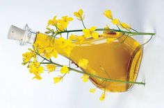 Vitamin K  Rapeseed oil is also a good source of vitamin K, which is essential for the bone health and for promoting the coagulation of the blood.  Other benefits  High in monounsaturated fats Contains 10 times more Omega 3 fatty acids than Olive Oil No artificial preservatives and is GM free Suitable oil for variety of diets, including gluten-free, vegetarian, Kosher and Halal