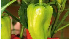 Top 5 Vegetable Crops for Beginners