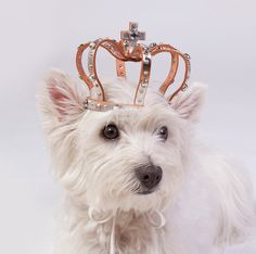 Leather dog crown with stone & studs Size M