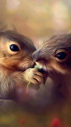 Белочки. #squirrels