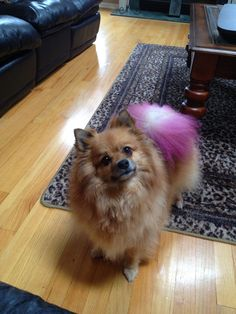 Foxie Roxie. She loves her pink tail!