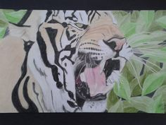 Desenho realista feito com lápis de cor por Carol Soares / Realistic draw made with color pencil by Carol Soares  #realisticpainting #tiger #animals #AlmaDasCores
