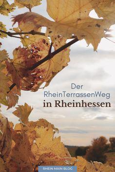 Tipps für den RheinTerrassenWeg in Rheinhessen - Rhein-Main-Blog Maine, Rhein Main Gebiet, To Go, Frankfurt, Travelling, Posts, Blog, Movie Posters, Outdoor