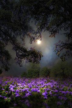 """ponderation: """" Flores de primavera by toalafoto """""""