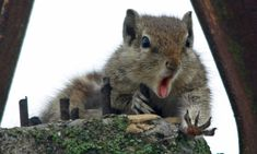 Oh, nuts! Poor squirrel looks devastated after dropping his nut