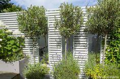 Fulham | Slim & Subtle Garden Design London Small Space Gardening, Garden Spaces, Small Gardens, Garden Design London, Slim Tree, Small Terrace, London Clubs, Built In Seating, Side Garden