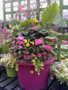 Good Gardening Costs: A Gethsemane Garden Center Pictorial Container Plants, Container Gardening, Small Garden Fairies, Garden Design Ideas Videos, Garden Ideas, Outdoor Pots, Shade Flowers, Garden Planters, Big Planters