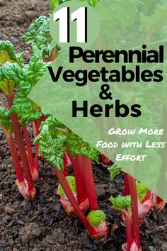 Do you want to grow more food for your family but don't have more time? That's where perennial vegetables and herbs come into play. These 11 plants grow food year after year with little work from you! #Perennials #PerennialGardening #VegetablePerennials