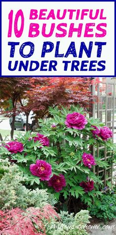 This list of bushes that thrive in the shade is AWESOME! So many beautiful flowers and they are all perennials. #fromhousetohome  #shadelovingshrubs #gardeningtipsandplants