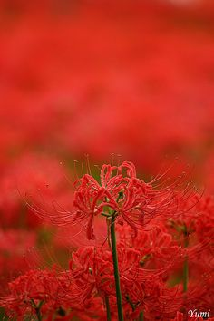 red in red by * Yumi * on Flickr.