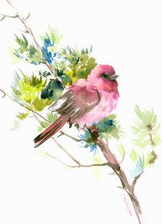 Rosefinch by on Etsy♥ Watercolor Paintings For Beginners, Watercolor Portraits, Watercolor Bird, Watercolor Landscape, Bird Pictures, Art Sketchbook, Bird Art, Cute Art, Painting & Drawing