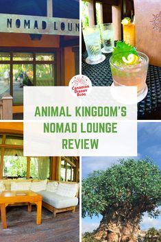 Walt Disney World's hidden gem is the the Nomad Lounge in Animal Kingdom. Find out why we love this lounge and think it's the perfect place to take a break and grab a delicious cocktail! Disney Secrets, Disney World Tips And Tricks, Disney Tips, Disney Cocktails, Fun Cocktails, Drinks, Disney On A Budget, Disney World Planning, Disney World Florida
