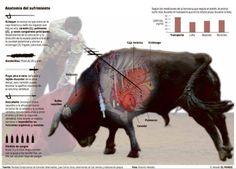 Corridas de toros: anatomía del sufrimiento