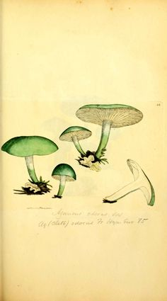 Coloured Figures of English Fungi or Mushrooms... James Sowerby  1897-1809