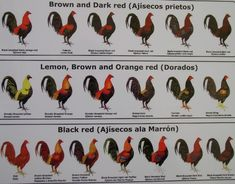 Names of Different Colors of Roosters chickens black red variations & brown red variations chart1.jpg (805×629)