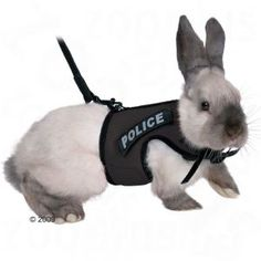 We have thought about offering leashes in our shop very carefully before deciding to do so – after all, they are quite controversial and potentially dangerous. Some rabbits love to be outside and don't mind a leash while others will absolutely refuse to tolerate one. Forcing the latter kind of rabbit could possibly be considered...