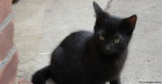 Man Chases the Cutest Black Kitten Through Italian Streets to Keep Him Safe!