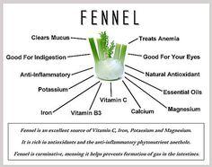 Fennel Benefits http://www.draxe.com #draxe #health #benefits #herbs #healing #fennel