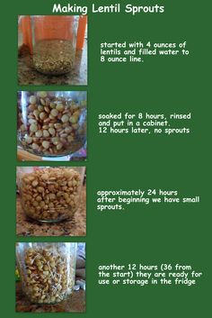 How to make Lentil Sprouts - great spring break activity