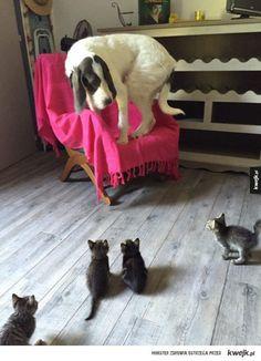 Małe kociaki są straszne